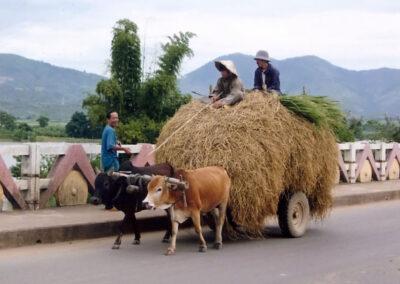 Char à boeufs dans les rues de Kontum